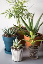 The Everygirl Easy Indoor Plants Succulents And Cactus