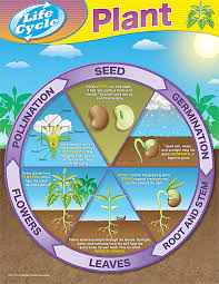 Science Related Chart Tcr7714 Plant Life Cycles Chart