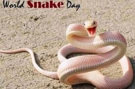 Snake, (suborder serpentes), also called serpent, any of more than 3,400 species of reptiles distinguished by their limbless condition and greatly elongated body and tail. World Snake Day 2020 Celebrating One Of The Most Misunderstood Creatures On Earth