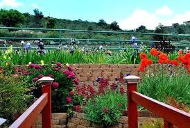 iris garden hummingbird iris gardens offer types of beauty iris garden inn 347 main street savannah