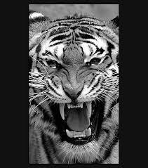 tiger iphone 6 wallpaper. Interesting Iphone Bengal Tiger IPhone 6 Wallpaper To Iphone