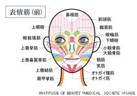 「表情筋」の画像検索結果