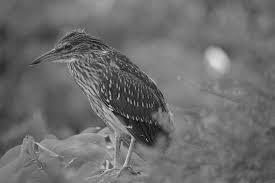 鳥 羽 自然 Pixabayの無料写真