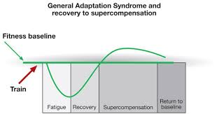 Muscle Recovery Time Chart World Rugby Strength Conditioning Game Demands The