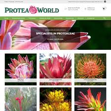 order plants online. Protea World, Plants Online And Nursery, - Buy Delivered To Your Door Order