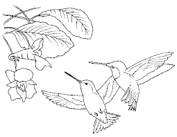 Small Picture Hummingbirds coloring page Free Printable Coloring Pages