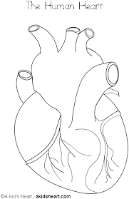 Small Picture Coloring Page of Human Heart