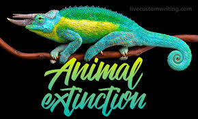 animal extinction essay why we should protect animals