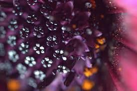 Flower Closeup #2 - Aubrey Moat - Photography, Flowers, Plants, & Trees,  Flowers, Other Flowers - ArtPal