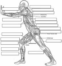 Human Muscle Labeling Worksheet – defenderauto.info
