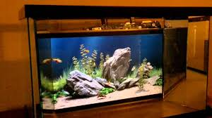 Funny Fish Tank Decorations Digital Fish Tank Youtube