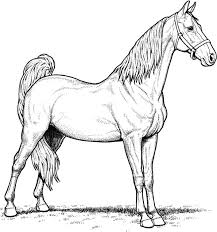 coloring page horse breeds mare horse