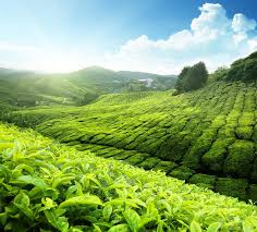 Image result for Malaysia countryside pictures