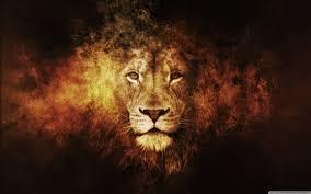 lion wallpaper full hd wallpaper search