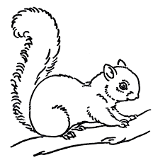 Small Picture Free Line Art Images Squirrel Drawings The Graphics Fairy