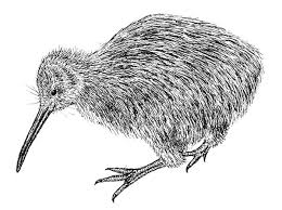 Small Picture Twin Kiwi Bird Coloring Pages Twin Kiwi Bird Coloring Pages
