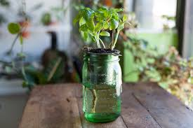 How To Create A DIY Self Watering Planter For The Home