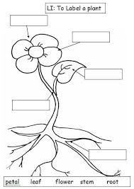 Small Picture Plant Coloring Pages Science Coloring Pages