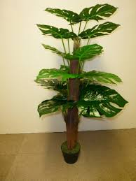 office indoor plants. Artificial Plants - 4ft 5ft Cheese Plant Indoor Office House N