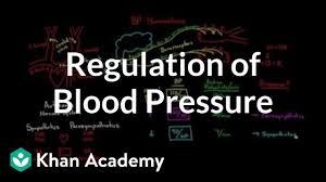Regulation Of Blood Pressure With Baroreceptors Video