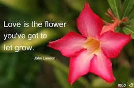 Flower Quotes About Beauty Best of Flowers Quotes Famous Quotes Blog Art Designs