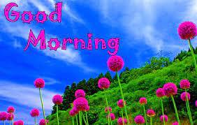 Good Morning Pic Hd Wallpaper Download
