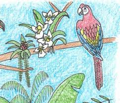 Coloring Pages Rainforest Alliance
