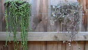 kit pocket plants ideas south vertical panel panels wall cape artifi woolly design town outdoor living