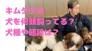 木村 拓哉 犬 種類