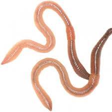 more views garden worms