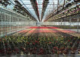 green story pei garden center