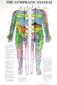 Whole Body Chart Individual Lymphatic System Poster Full Body Front And