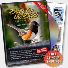 Warbler Id Chart Bring On The Birds Home California Bird Identification