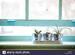 Kitchen Window Sill Plants On Window Sill In Primary School Classroom Stock Photo