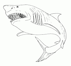 Dessin Requin Blanc Coloriage Download Dessin A Colorier De Requin Blanc L
