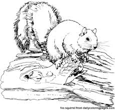 Help kids do more than just color with these educational coloring pages! Texas Fox Squirrel Animal Coloring Pages Png 500 480 Pixels Animal Coloring Pages Zebra Coloring Pages Bird Coloring Pages