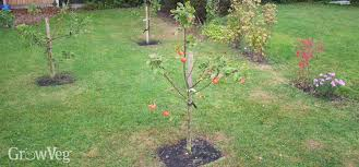 Summer Pruning  Peoples Trust For Endangered SpeciesCan You Prune Fruit Trees In The Summer