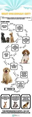 Dog Breed Compatibility Chart Dog Breed Selector Puppy Finder Choosing A Dog Dog Breed