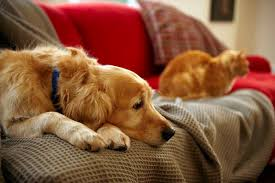 activities and extra attention can help a depressed dog