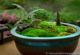 Small Picture tabletop moss garden must make one of these Laura wants to do