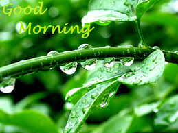morning water drops hd wallpaper 2 1600 x 1200