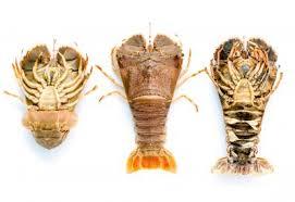 Bugs Australian Fisheries Management Authority