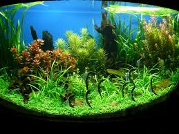 Image result for purchase a fish tank