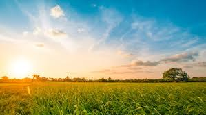 Grass Couch Garden Grass Could Become Source Of Cheap And Clean Renewable Energy Scientists Have Claimed Free Great Picture The green Grass Of Home News Cardiff University
