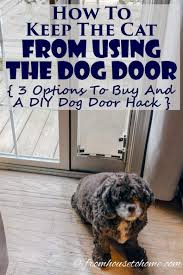how to keep the cat from using the dog door 3 options to and