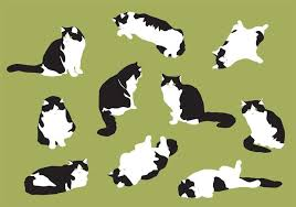 Image result for fat cat