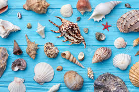 sea shells collection sea shells collection close up decoration from sea shells on