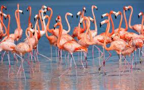 Null Design Flamingo Floor Lamp