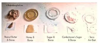 borax for ant control.  For Borax Ant Poison Test Results Intended For Control N
