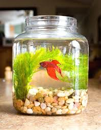 Small Fish Bowl Decorations Good Plants For Betta Fish Bowl Best Fish Bowl Ideas On Vase Fish 25